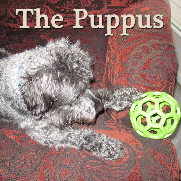 the puppus