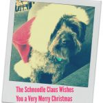 Merry Christmas from the Schnoodle Claus