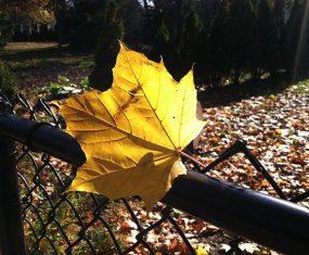 Beautiful Beautiful Fall